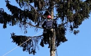 Обрезка  и удаление аварийных деревьев Киев