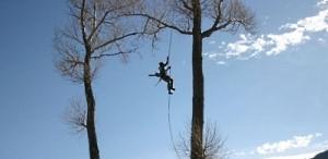 Обрезка  и удаление аварийных деревьев в Киеве